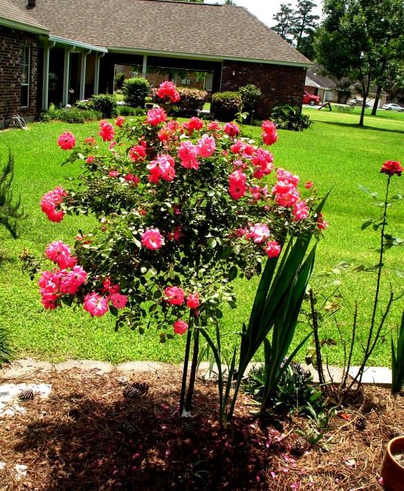 springgarden13 022