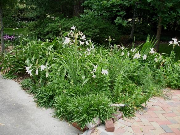 springgarden13 031