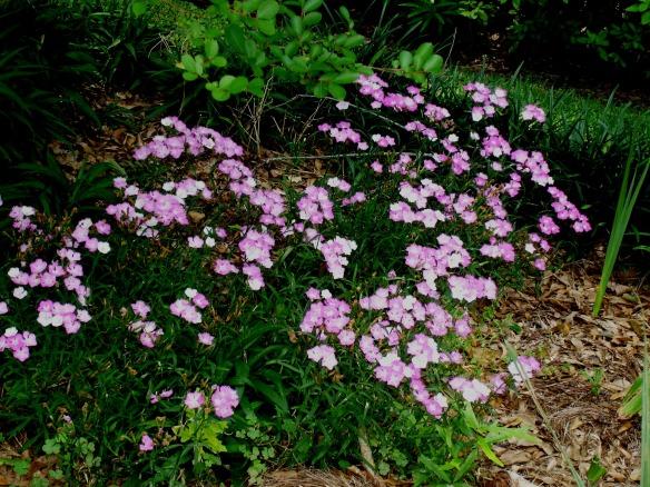 springgarden13 032